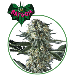 hero seeds_bat gum pianta