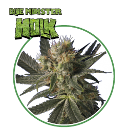 hero seeds_blue monster pianta