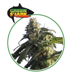 hero seeds_green shark pianta