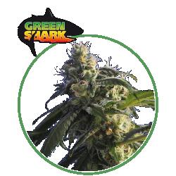 hero seeds_green shark pianta