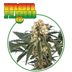 hero seeds_iron flow pianta